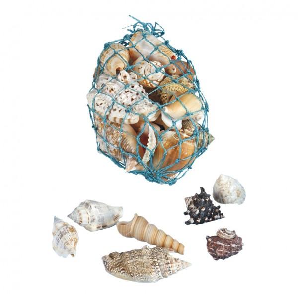 Muscheln, 6cm, 300gr./Btl., Naturmaterial