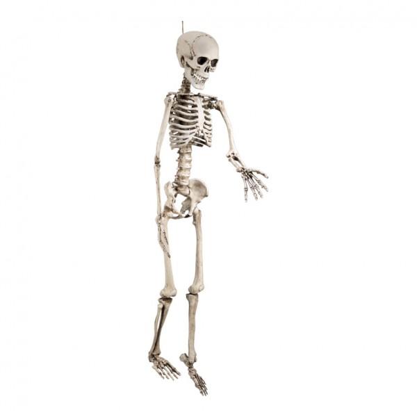 Skelett, 160x45cm, Kunststoff