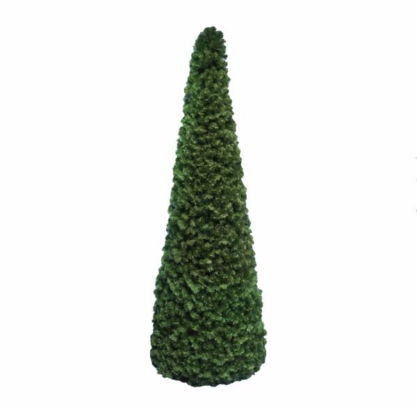 Tannenbaum Cone Spruce